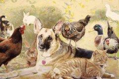 Sarah's Animals copyRSZHomepg